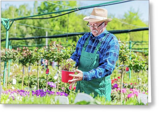 Senior Gardener Choosing A Potted Plant. Greeting Card