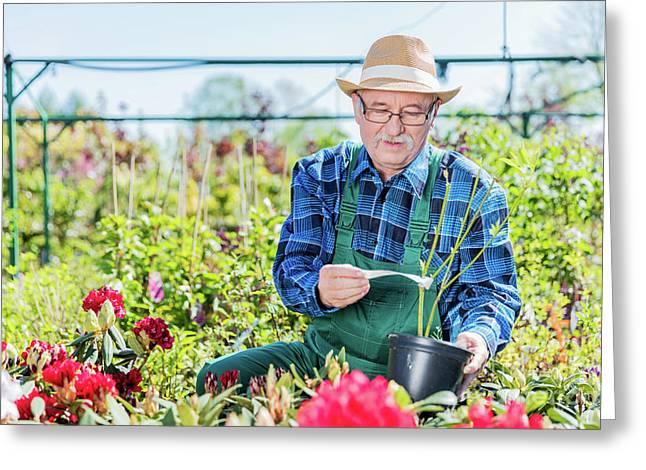 Senior Gardener Selecting A Tree. Greeting Card