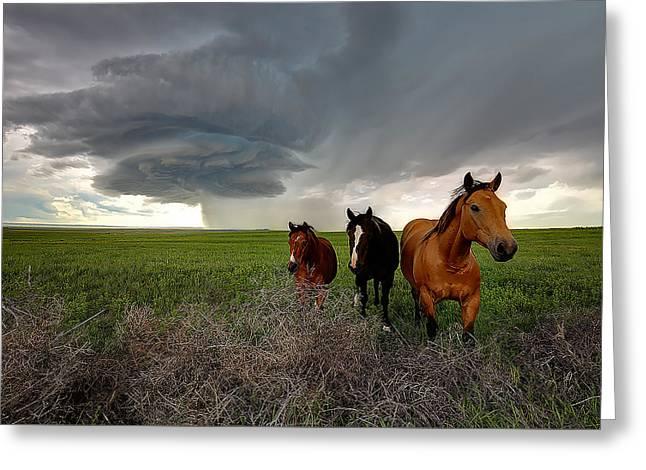 Sensing The Storm #3 Greeting Card