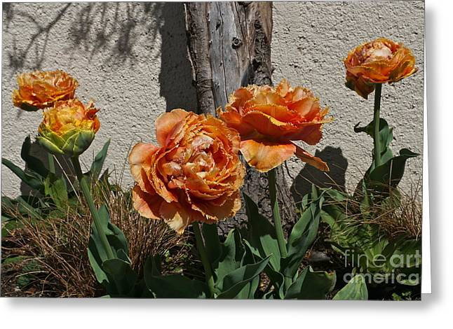 Sensual Touch Tulips Greeting Card by Byron Varvarigos
