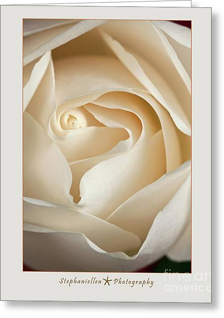 Sensual White Rose Greeting Card by Stephanie Hayes
