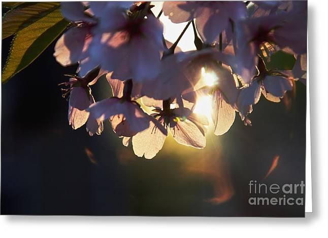 Sentimental Blooming Greeting Card by Hideaki Sakurai