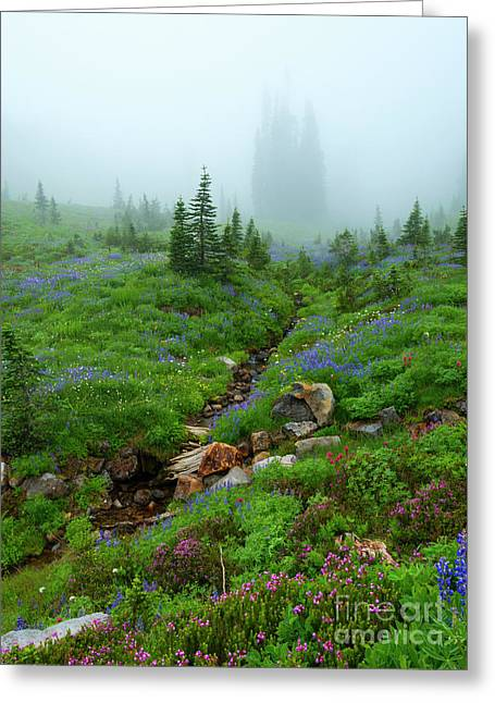 Sentinels In The Mist Greeting Card by Mike Dawson