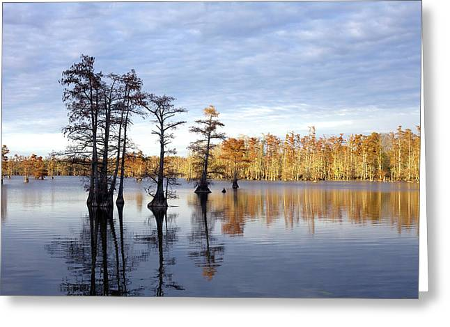 Sentinels Of The Lake Greeting Card