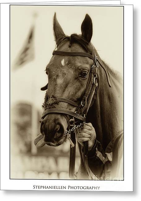 Sephia Racehorse Greeting Card by Stephanie Hayes