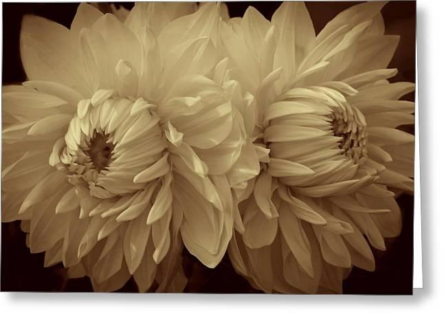 Sepia Dahlias Greeting Card by Patricia Strand