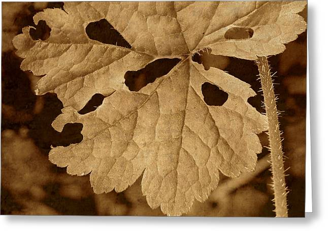 Sepia Leaf Greeting Card by Bonnie Bruno