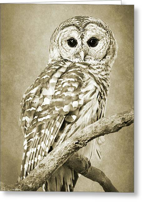 Sepia Owl Greeting Card
