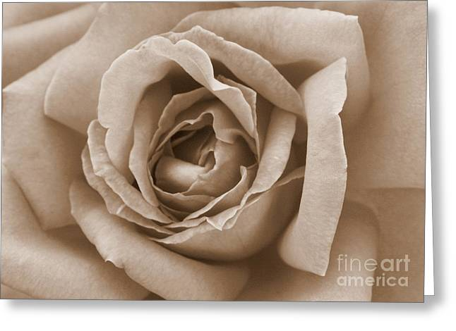 Sepia Flowers Greeting Cards - Sepia Rose Greeting Card by Carol Groenen