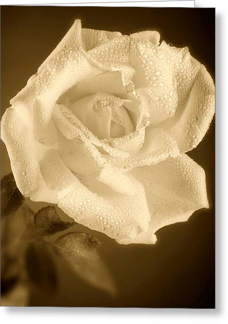 Sepia Rose With Rain Drops Greeting Card by M K  Miller