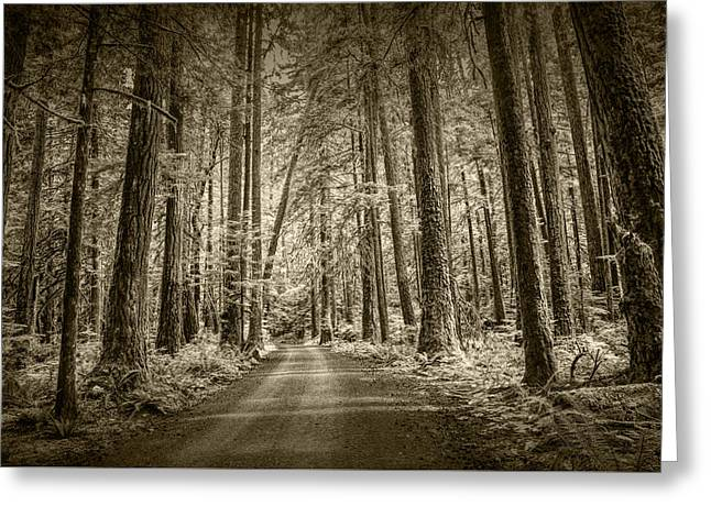 Sepia Tone Of A Road In A Rain Forest Greeting Card by Randall Nyhof