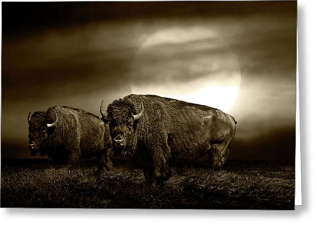 Sepia Tone Of An American Bison Under A Super Moon Greeting Card