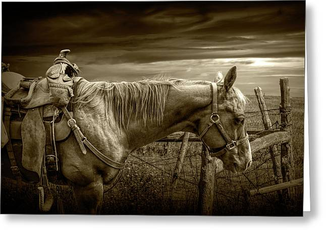 Sepia Tone Of Back At The Ranch Saddle Horse Greeting Card by Randall Nyhof