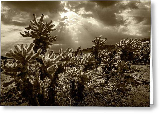 Greeting Card featuring the photograph Sepia Tone Of Cholla Cactus Garden Bathed In Sunlight by Randall Nyhof
