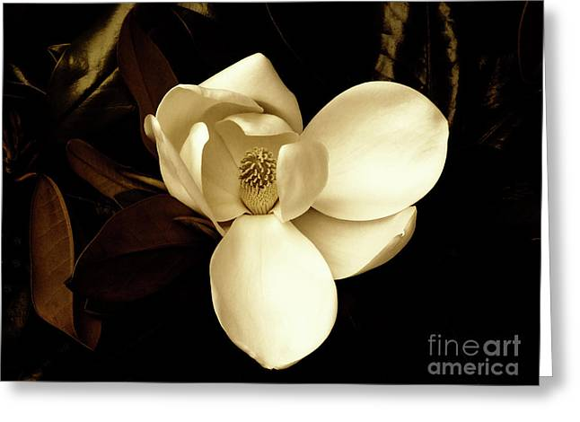 Sepia-toned Magnolia Greeting Card