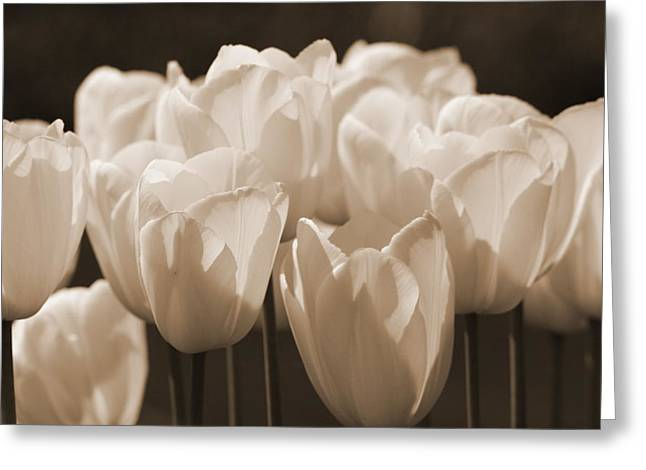 Sepia Tulips Greeting Card by Karla DeCamp