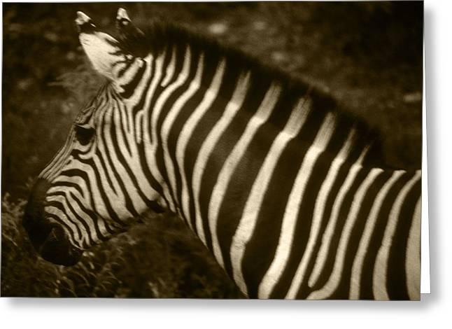 Sepia Zebra Greeting Card by Greg Slocum