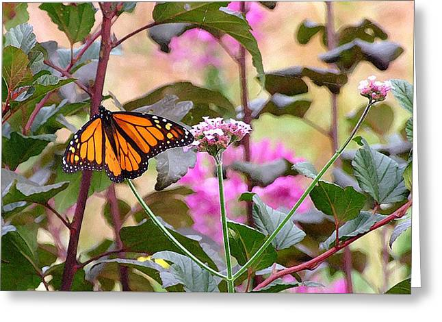 September Monarch Greeting Card by Janis Nussbaum Senungetuk