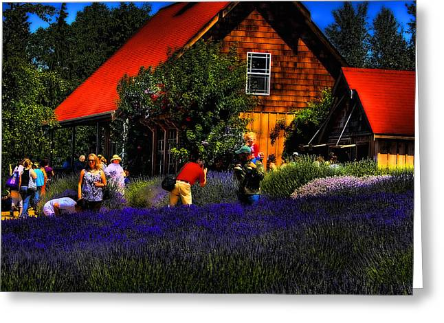 Sequim Lavender Greeting Card by David Patterson