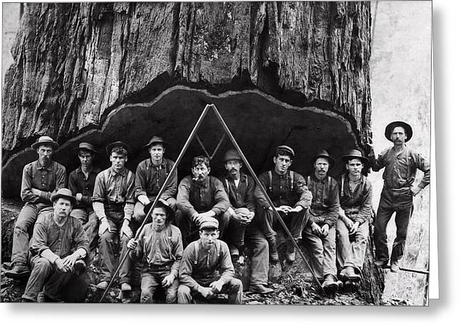Sequoia Lumberjack Portrait  1906 Greeting Card