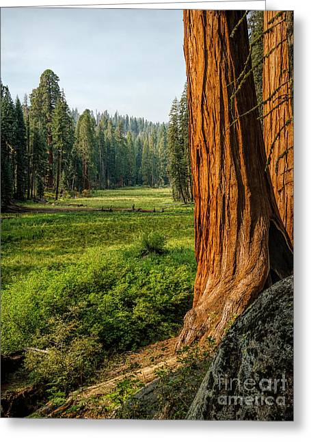 Sequoia Np Crescent Meadows Greeting Card