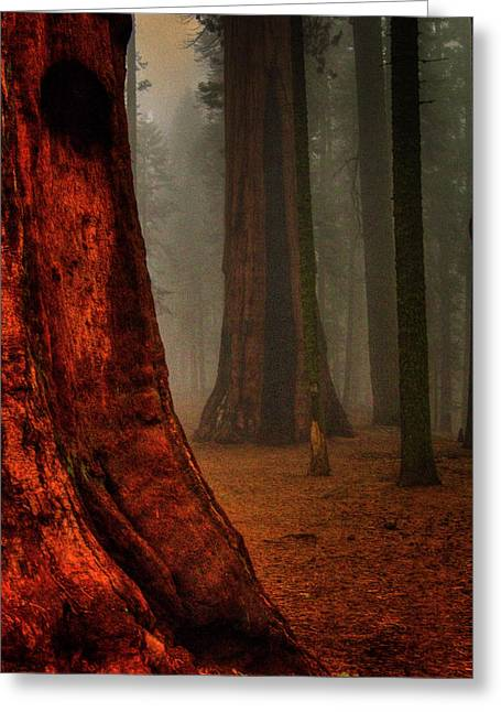 Sequoias In The Clouds Greeting Card