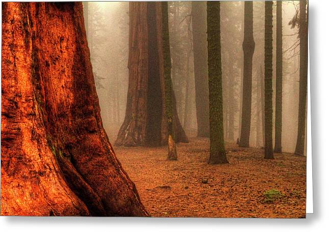 Sequoias Touching The Clouds Greeting Card