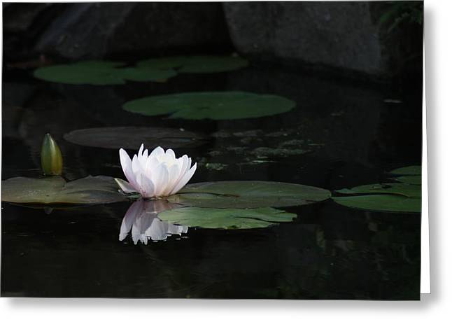 Serene In Pink Greeting Card