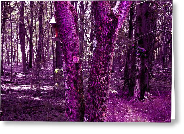 Greeting Card featuring the photograph Serene In Purple by Michelle Audas