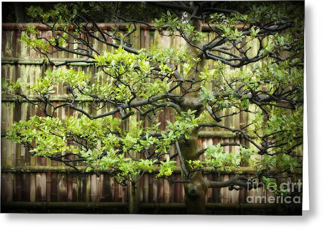 Serene Japanese Tree With Bamboo Fence Greeting Card