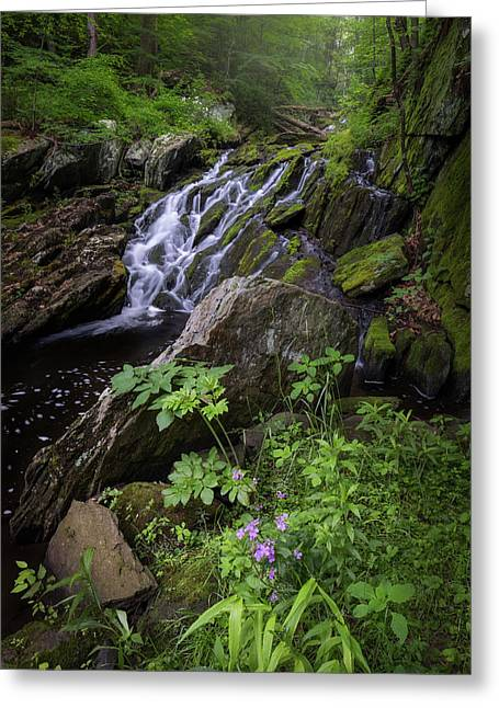 Serene Solitude Greeting Card