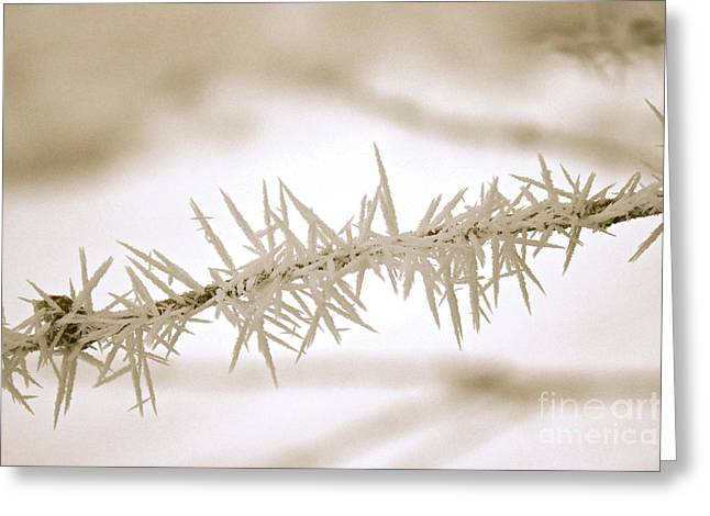 Serene Winter Frost Greeting Card