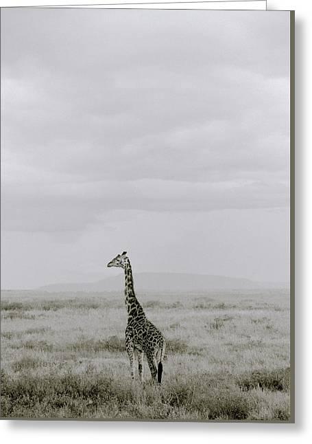 Serengeti Solitude Greeting Card by Shaun Higson