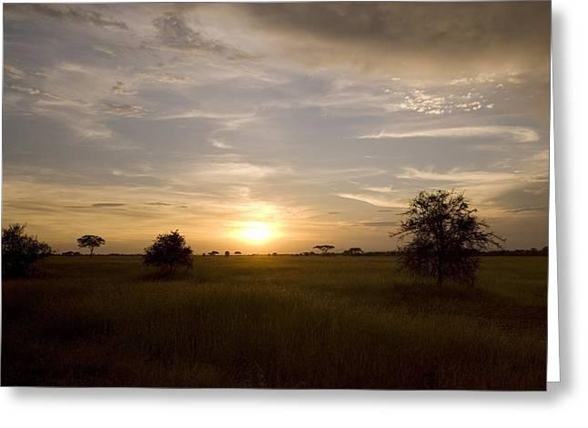 Serengeti Sunset Greeting Card by Patrick Kain