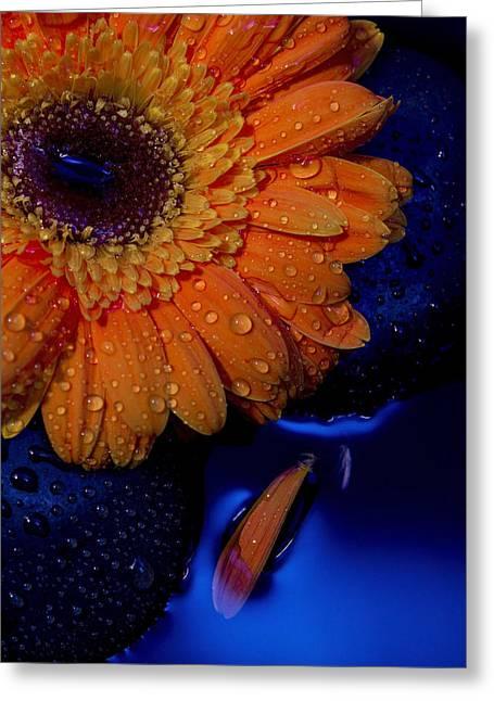 Serenity Greeting Card by Amber Kresge