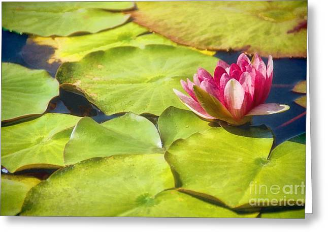 Serenity And Solitude Greeting Card by Peggy Hughes