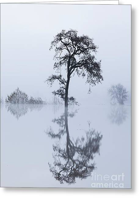 Greeting Card featuring the photograph Serenity by Brenda Tharp