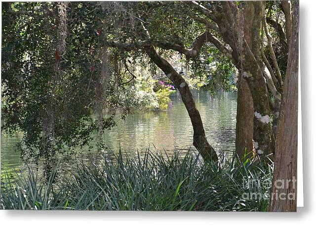 Greeting Card featuring the photograph Serenity by Carol  Bradley
