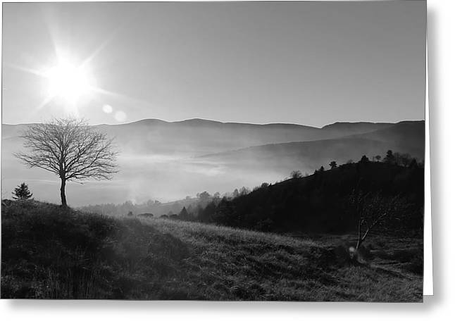 Serenity In Winter Greeting Card by Olga Cojocariu