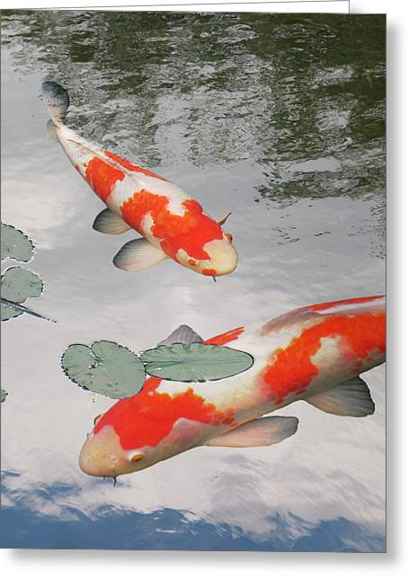 Greeting Card featuring the photograph Serenity - Red And White Koi by Gill Billington
