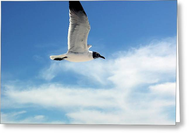 Serenity Seagull Greeting Card by Marie Hicks