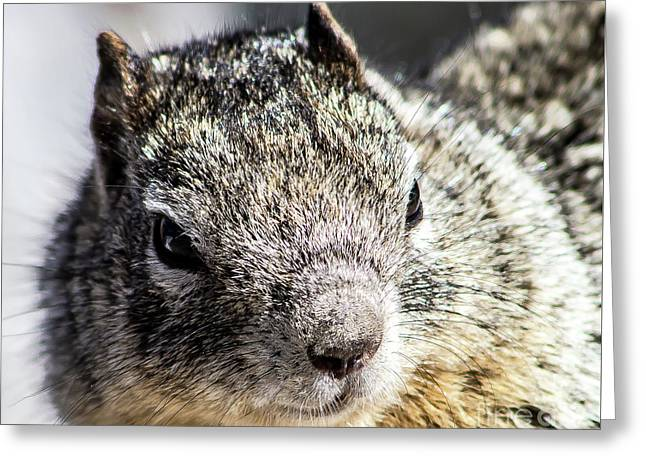 Serious Squirrel Greeting Card