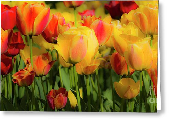 Greeting Card featuring the photograph Seriously Spring by Wendy Wilton