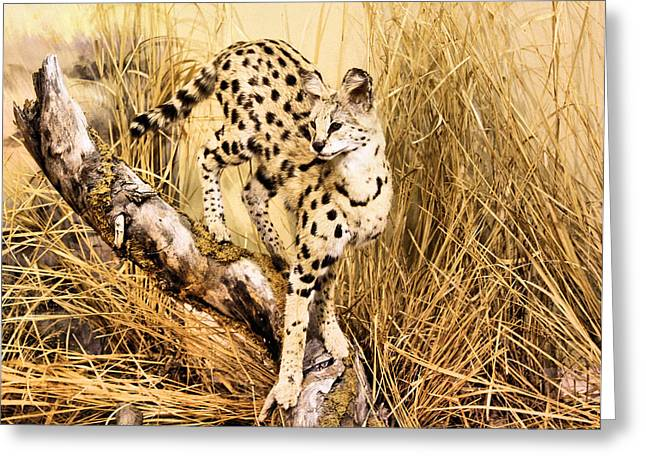 Descendant Greeting Cards - Serval Greeting Card by Kristin Elmquist
