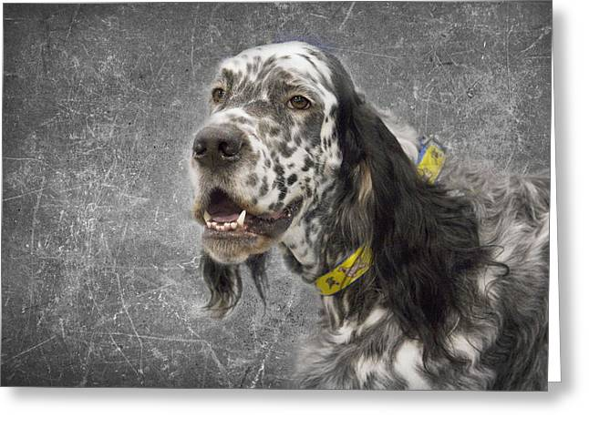 Setter 1 Greeting Card