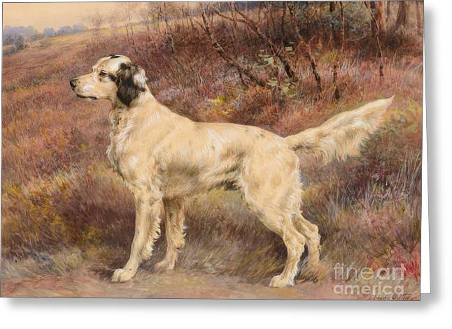 Setter On Profile Greeting Card