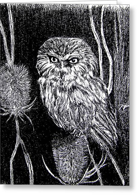 Wild Life Drawings Greeting Cards - Seven Inch Owl Revised  Greeting Card by Nancy Rucker