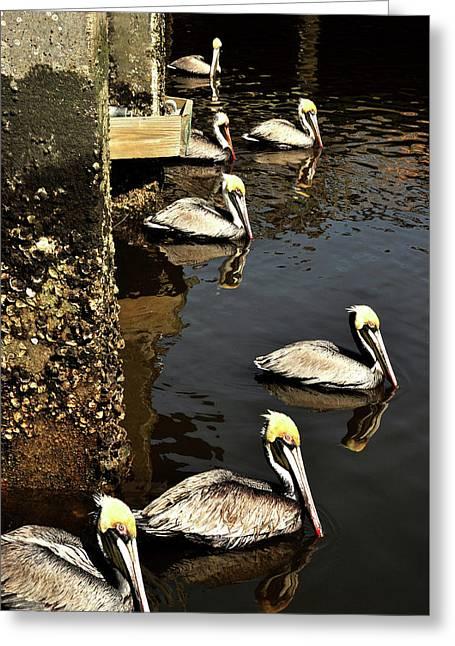 Seven Pelicans Greeting Card