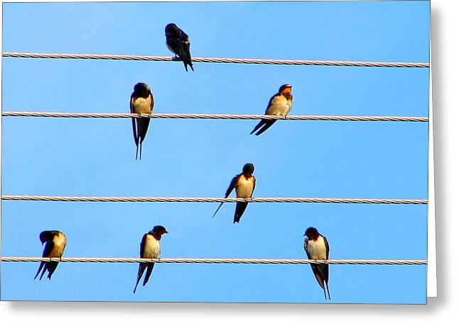 Greeting Card featuring the photograph Seven Swallows by Ana Maria Edulescu