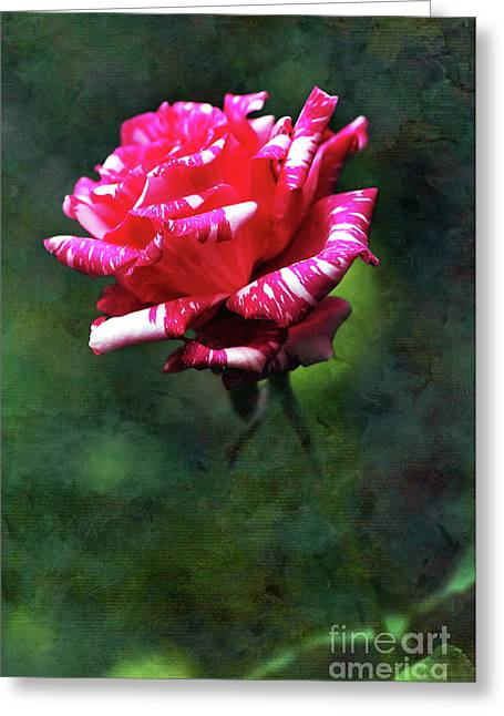 Sexy Rexy Rose Greeting Card by Kaye Menner